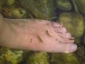 Fish pédicure dans Zarbi img_5799-300x225